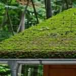 roof damage repair or replacement